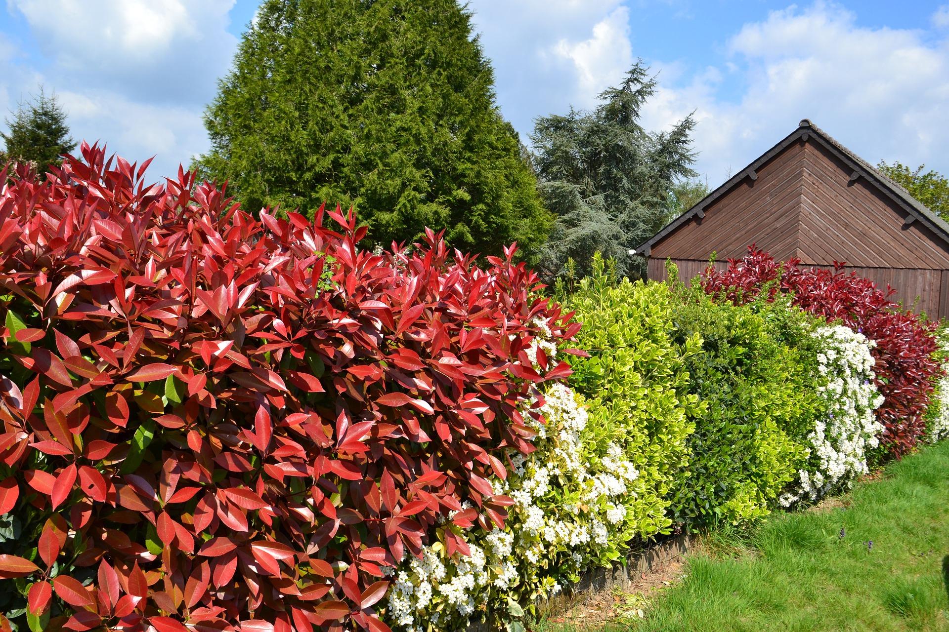 Taille Du Laurier Tin jardinage: par pitié, n'essayez pas d'être à la mode | slate.fr