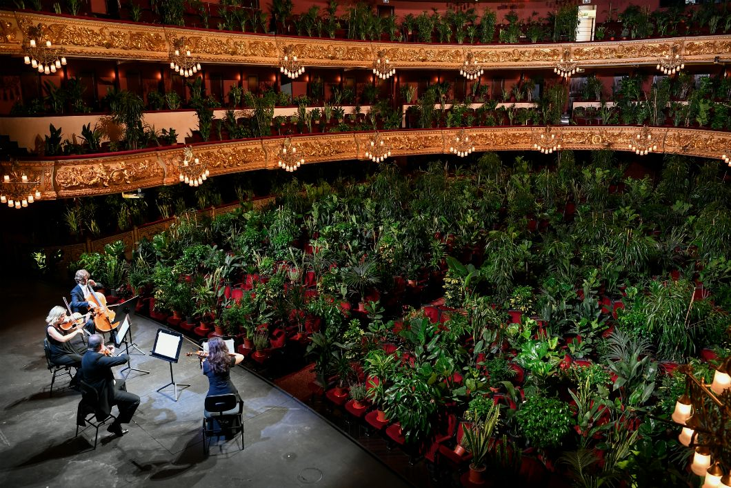 Avec les restrictions de rassemblementqui ont paralysé le monde –et qui sont pour la plupart toujours d'actualité–,les musicien·nes ont dû faire preuve de créativité. Sur une idée de l'artiste Eugenio Ampudia, le quatuor UceLi interprète Crisantemi, un quartet de Puccini, devant un public composé de 2.292 végétaux lors d'un concert retransmis en streamingpour marquer la réouverture du Grand Théâtre du Liceu, à Barcelone, le 22 juin. Les plantes ont ensuite été offertes au personnel soignant de l'hôpital public de la ville pour leremercier de son travail pendant l'épidémie.