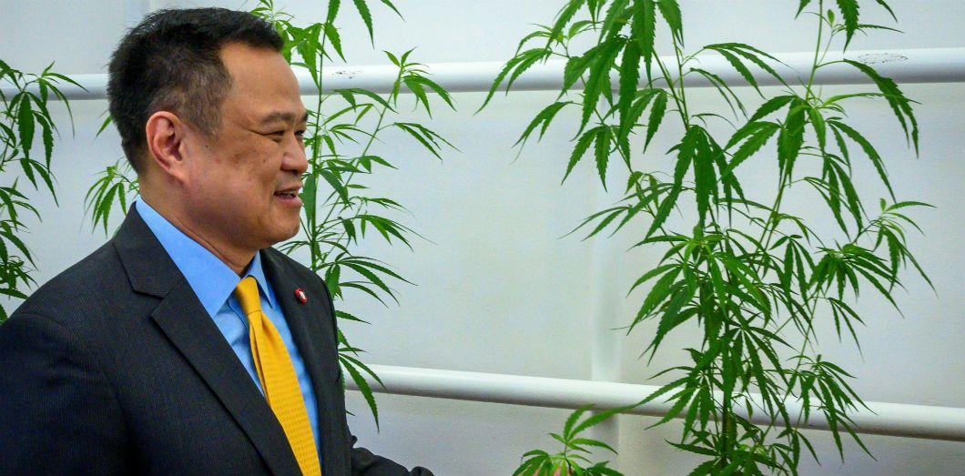 Le ministre de la Santé thaïlandais, Anutin Charnvirakul, touche unplantde majijuana au cours de l'ouverture d'une clinique du cannabisau département du Development de la médecine thaï traditionelle et de la médecine alternative, à Bangkok, le 6 janvier2020.  Mladen Antonov/ AFP