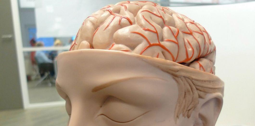 cortex cingulaire postérieur