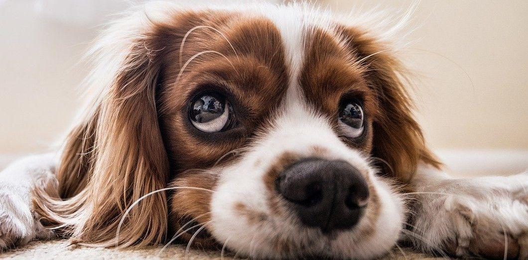 Les animaux ont été laissés sans eau ni nourriture pendant environ une semaine. | PicsbyFran via Pixabay
