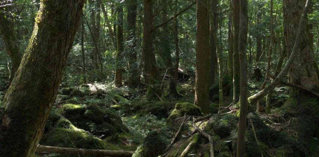 aokigahara la forêt où les japonais se cachent pour mourir slate fr