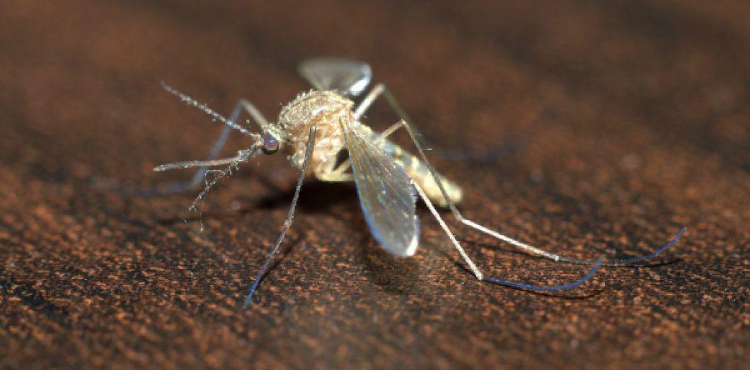 tuer les moustiques affordable jbzp pige moustiques mouche insectes pige anti insecte avec. Black Bedroom Furniture Sets. Home Design Ideas