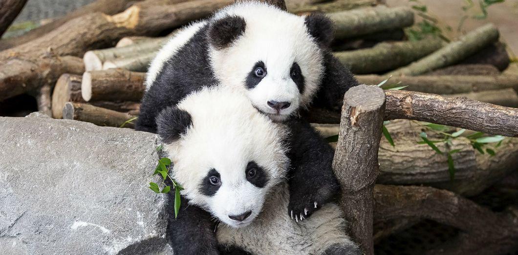 Faute De Frequentation Un Zoo Envisage De Nourrir Des Animaux Avec D Autres Slate Fr