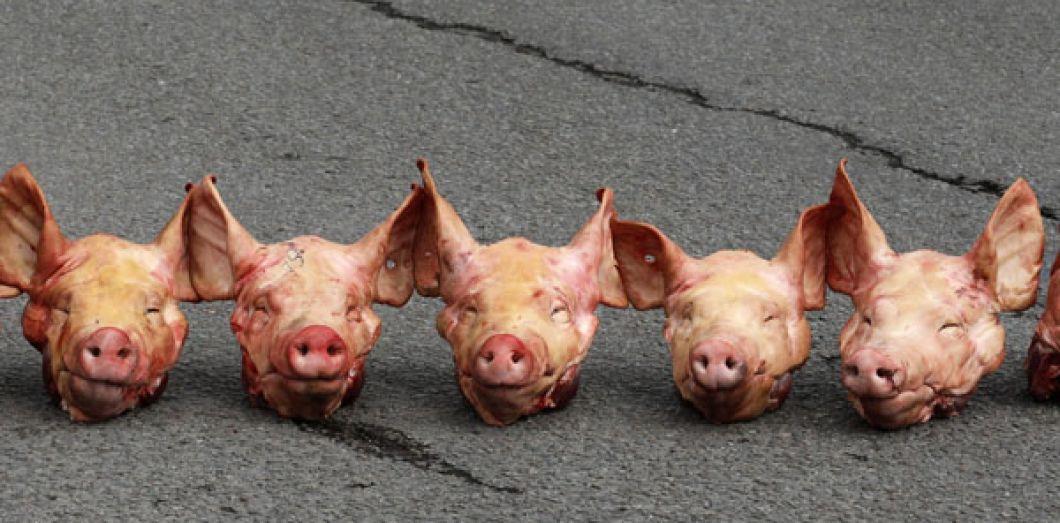 Israel A Un Probleme De Porc Slate Fr