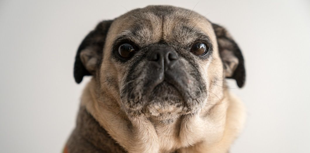 C Est Le Moment Ideal Pour Adopter Un Animal Domestique Slate Fr