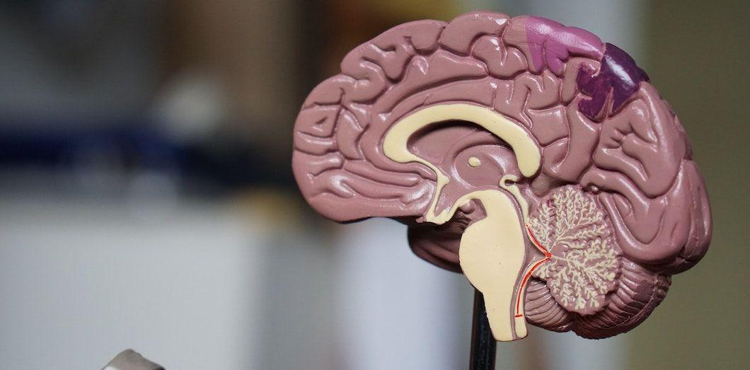 Un homme muet depuis quinze ans peut à nouveau s'exprimer grâce à un implant cérébral
