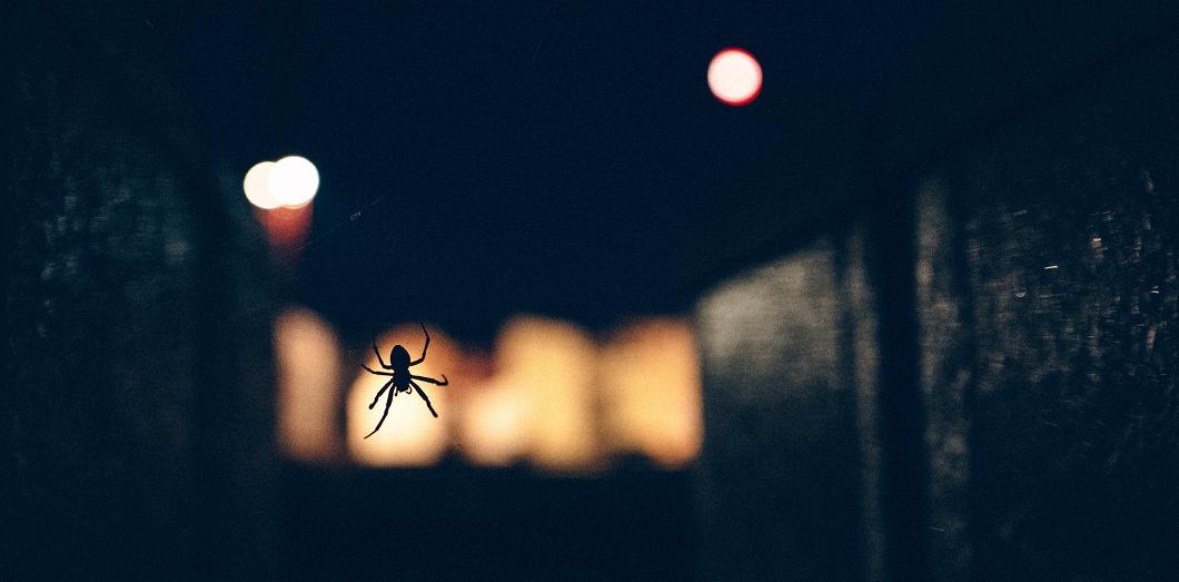 The spider | Matthias Ripp via Flickr CC License by