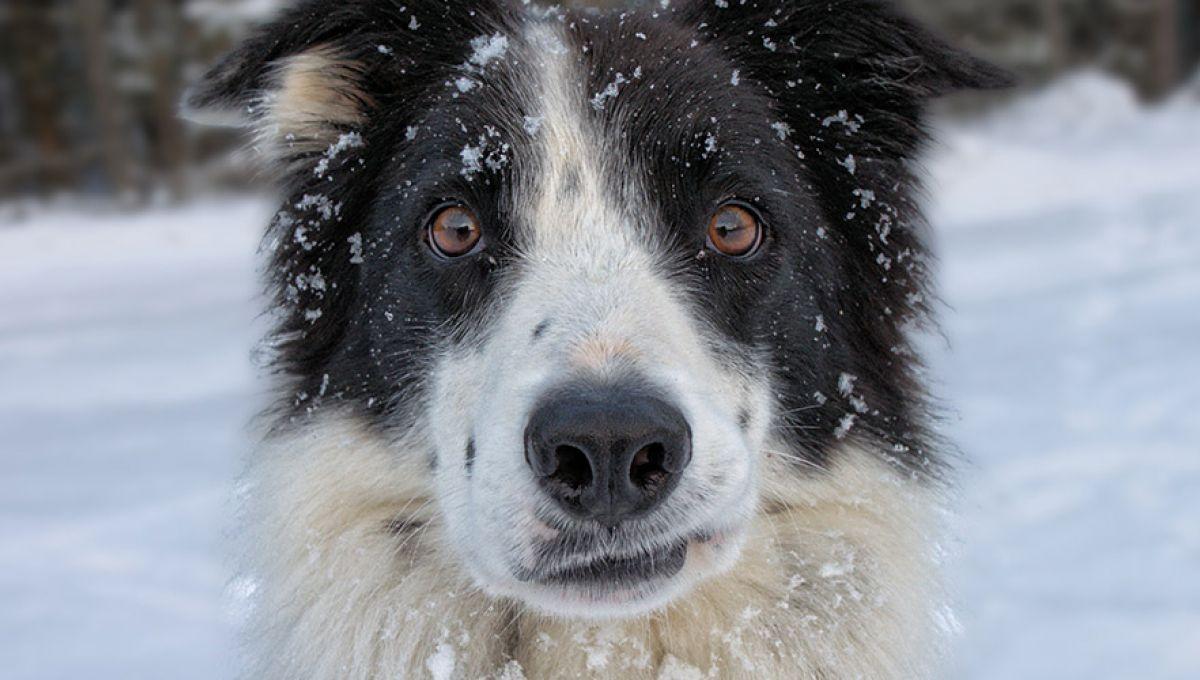 Chien Fait Ses Besoins La Nuit n'adoptez pas de chien avant d'avoir des enfants | slate.fr