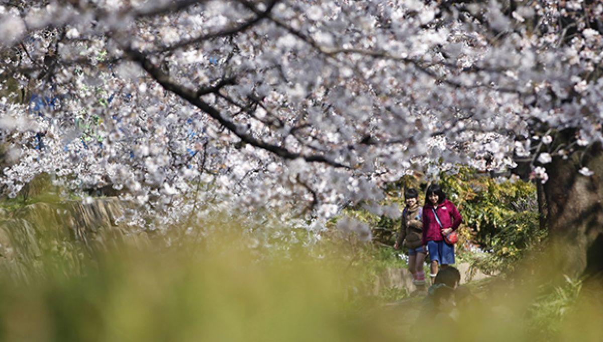 vaccin hpv japon dezvoltarea viermei rotunde în corpul uman