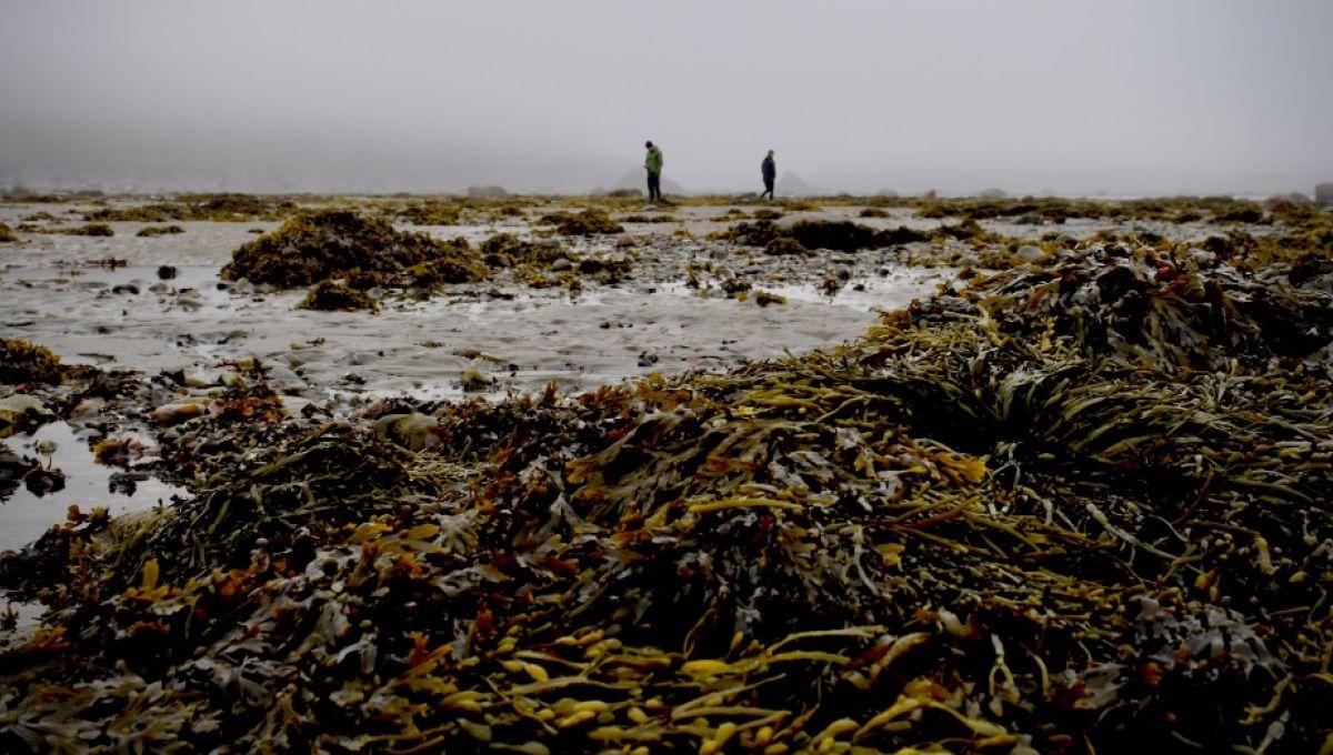 Les algues nocives présentes sur les bords des lacs et rivières ont proliféré avant la fin du Permien-Trias.  Marc Antoine Dery via Unsplash