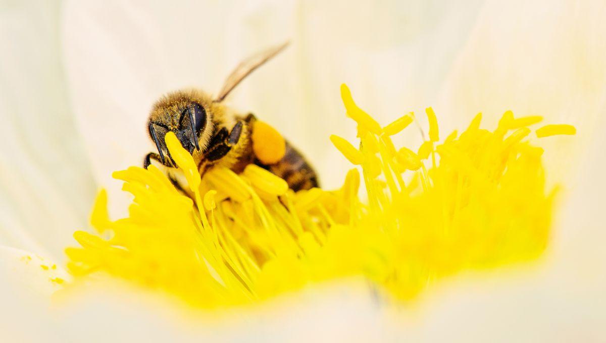 De nombreuses cultures ont une pollinisation particulière appelée pollinisation vibratile.| Kat Jayne via Pexels