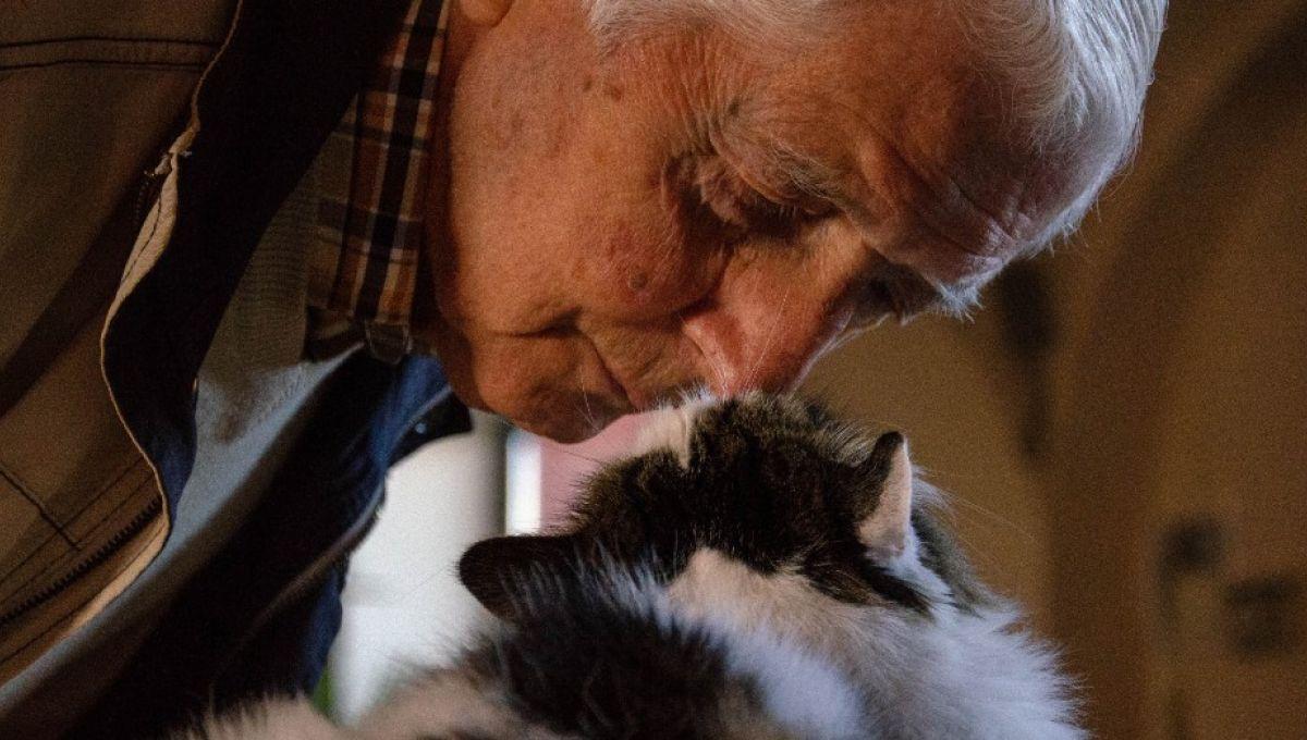 La proportion de mutations provenant des pères est similaire chez les chats et les humains. | Pietro Schellinovia Unsplash