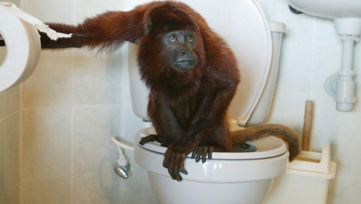 Tűri a WC- vel a prosztatával